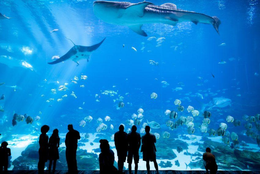 Aquarium ile maurice immobilier ile maurice